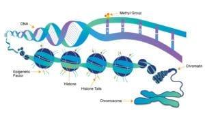 DNA epigenetics
